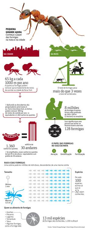 infografico_formiga